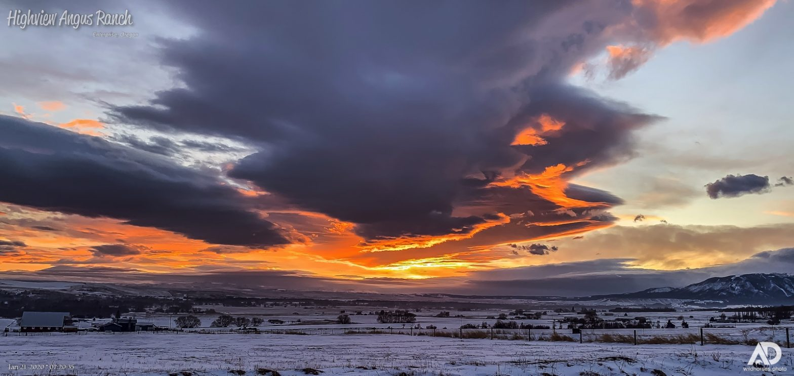 Divine Sunrise at home on Highview Angus, Jan 21, 2020